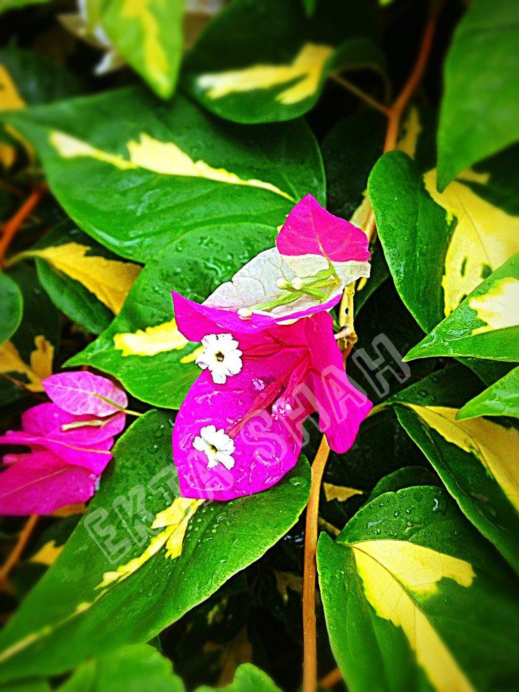 After Rain Flower2.jpg